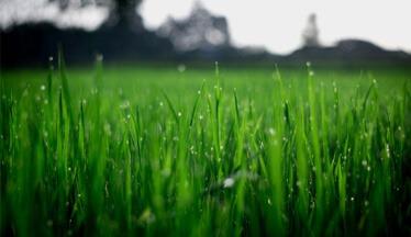 a perfectly manicured Ottawa lawn