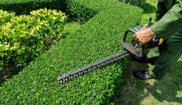 A hedge is expertly trimmed by a hunt club east snow & lawn worker