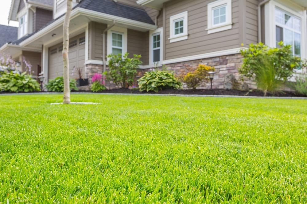 Healthy RTF grass lawn in Ottawa