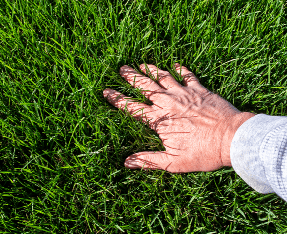 a man feeling the thick green grass on his lawn