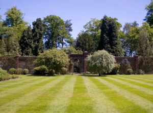 a professionally striped lawn