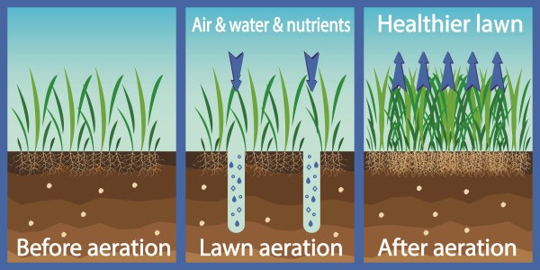 an infographic showing your grass before and after you aerate your lawn