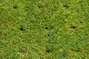 green aerated lawn